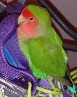 website sonny shoe